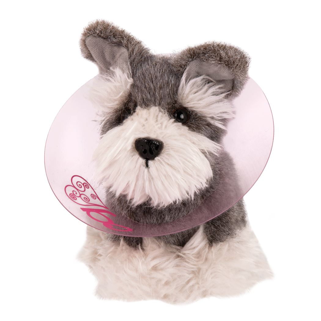 Pup wearing cone around neck