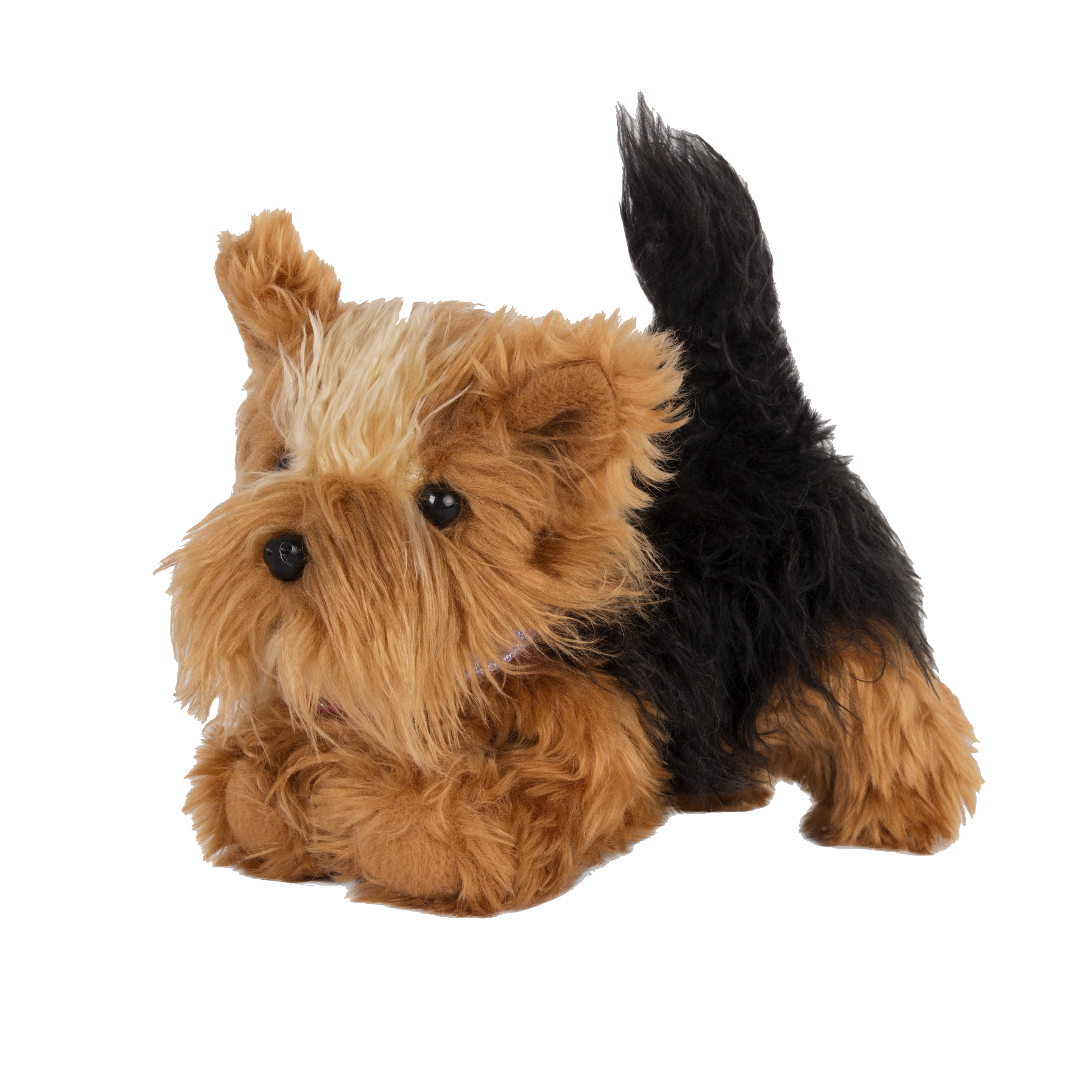 Yorkshire Terrier Pup with front paws bent