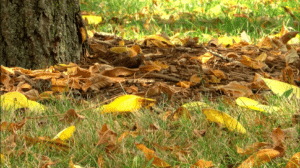 brown leaves laying at the base of a tree