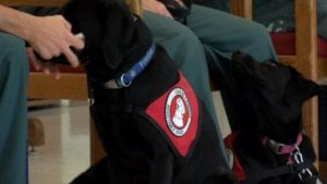 Dog wears vest for Can Do Canine.