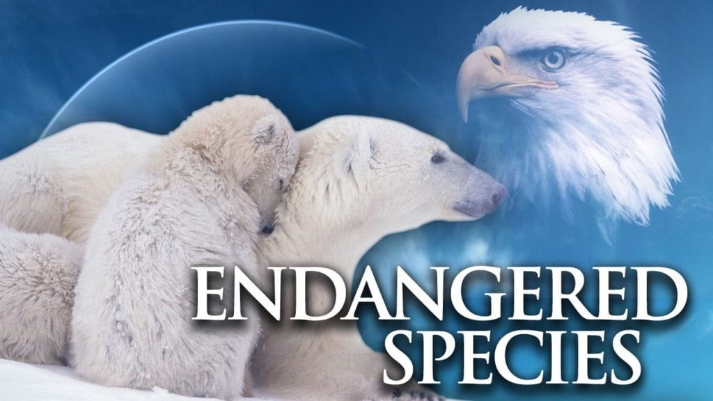 States blast plan to overhaul endangered species protection