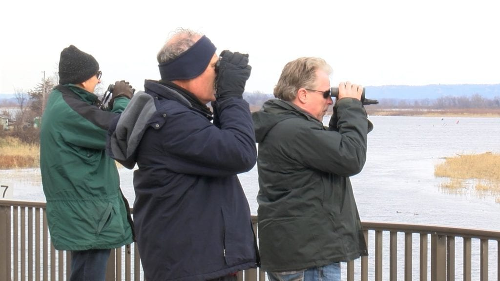 A group of men use binoculars to see the waterfowl up close.