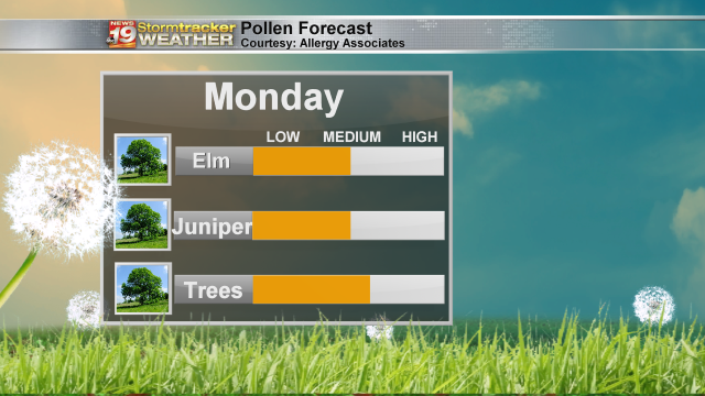Allergy-Forecast-