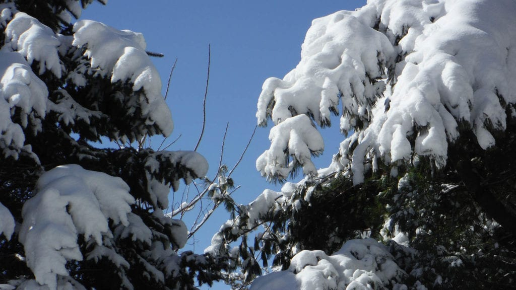 Weather Outlook: Sunshine, a light breeze, and more wonderful winter weather