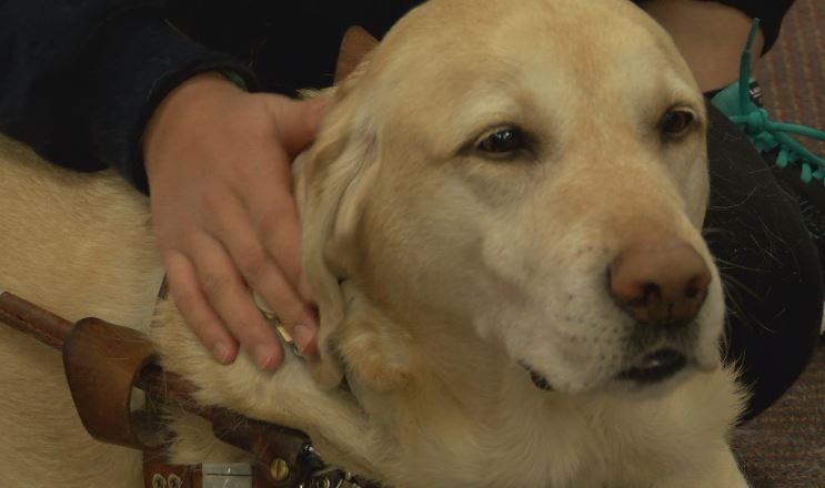 Therapy dogs help UWEC students relax during finals week