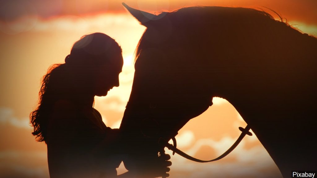 Potentially deadly equine virus found in Taylor County