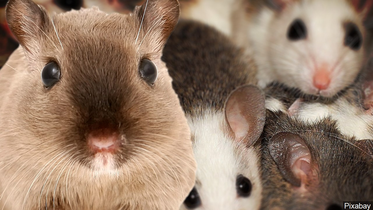 Cold weather on the way: How you can keep rodents from getting inside