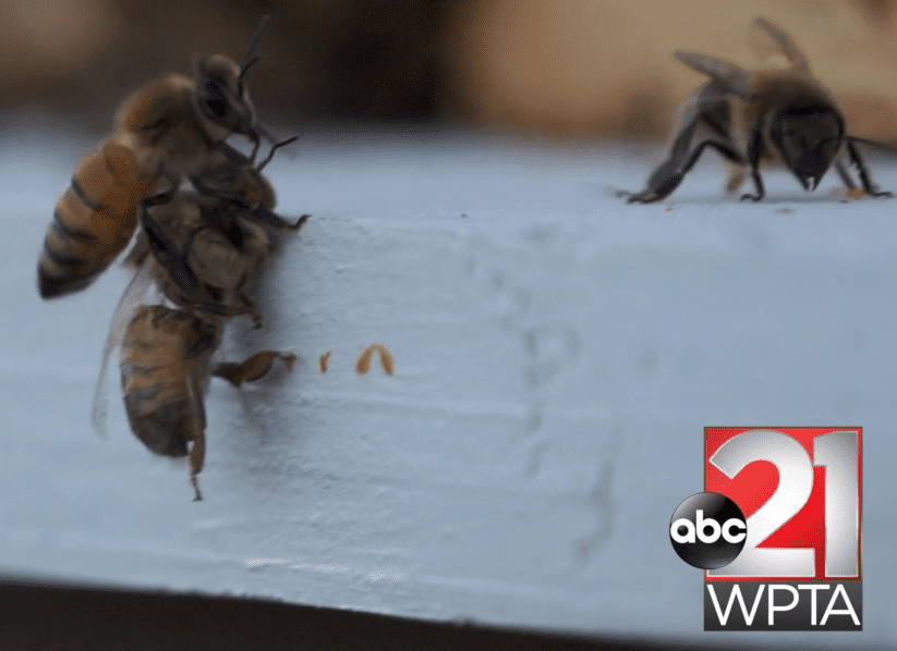Hive life is the ultimate reality show - WPTA