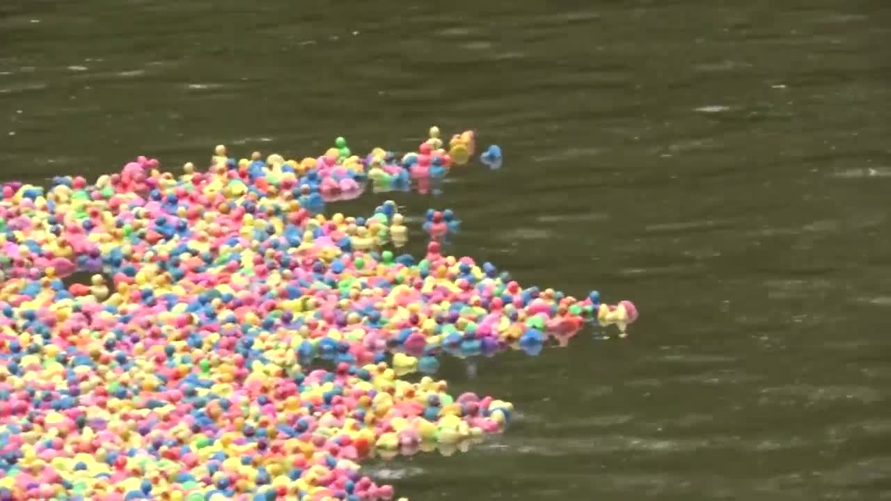 Annual SCAN Duck Race set for Saturday