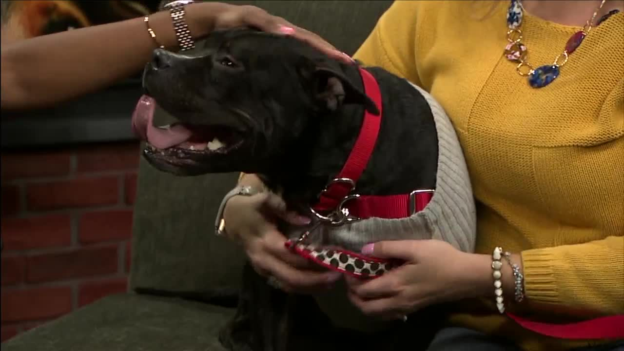 Forever Home Friday: Meet Timothy