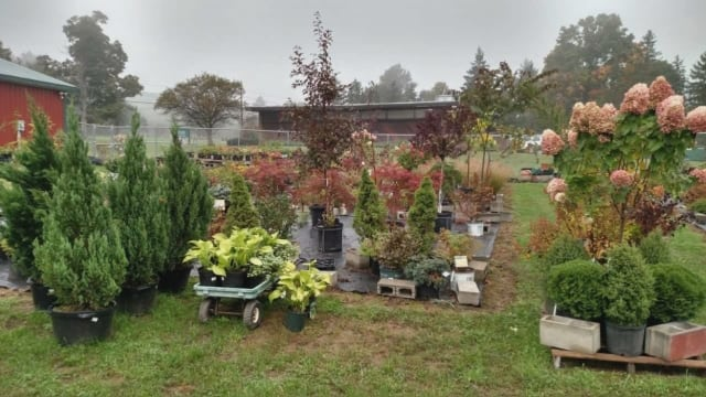 Plants and more for sale at Hillside Garden Landscaping