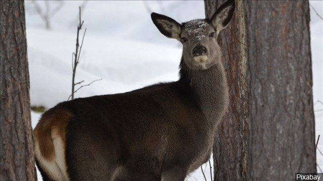 Deadly deer virus found in Minnesota for the first time