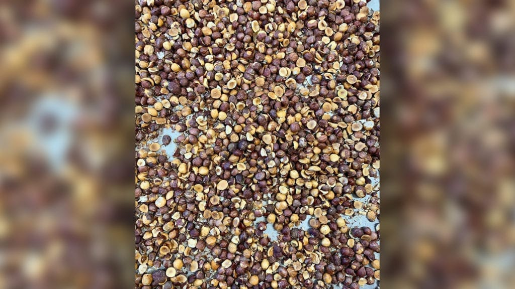 Hazelnut crops yielding profits in a dismal time for dairy farmers
