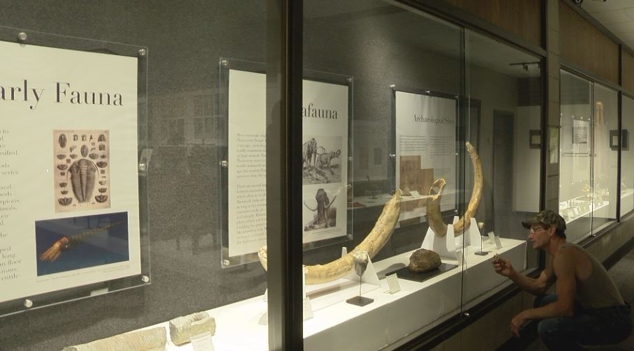Brian Wegman compares his discovery next to an adult mammoth tooth on display.