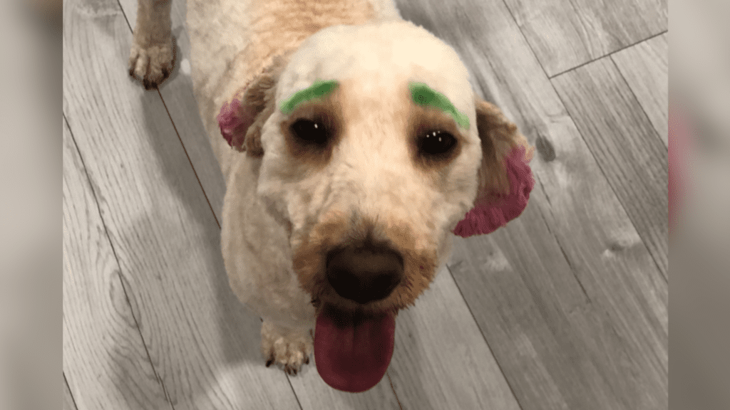 Florida woman's dog dyed green and pink in bizarre grooming debacle