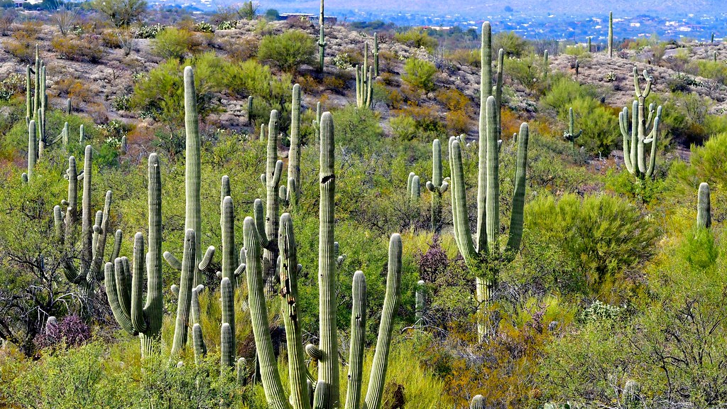 Saguaro National Park entrance fees reportedly stolen