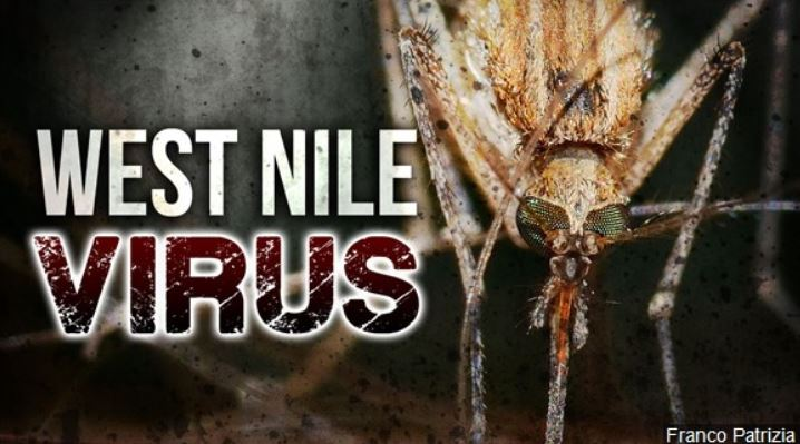West-Nile-MGN
