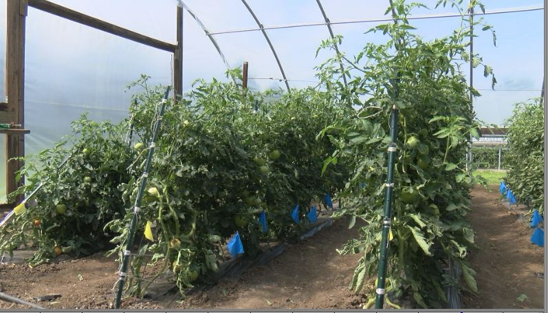 U of M developing sustainable farming practices for changing climate