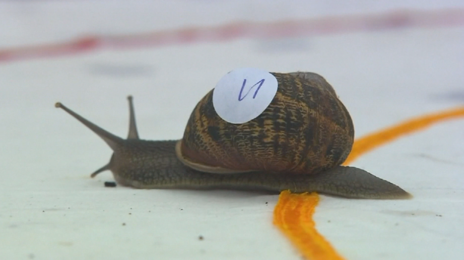 World Championship Snail Race held in England