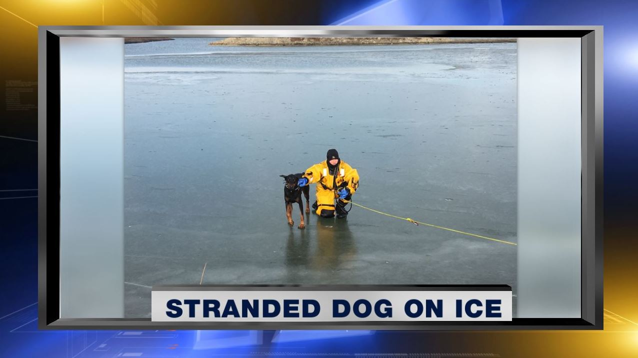 Rochester firefighters rescue stranded dog