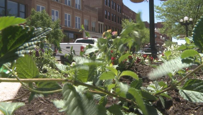 Students, organizations plant flowers to attract pollinator insects to Waterloo