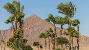 Palm Trees Windy
