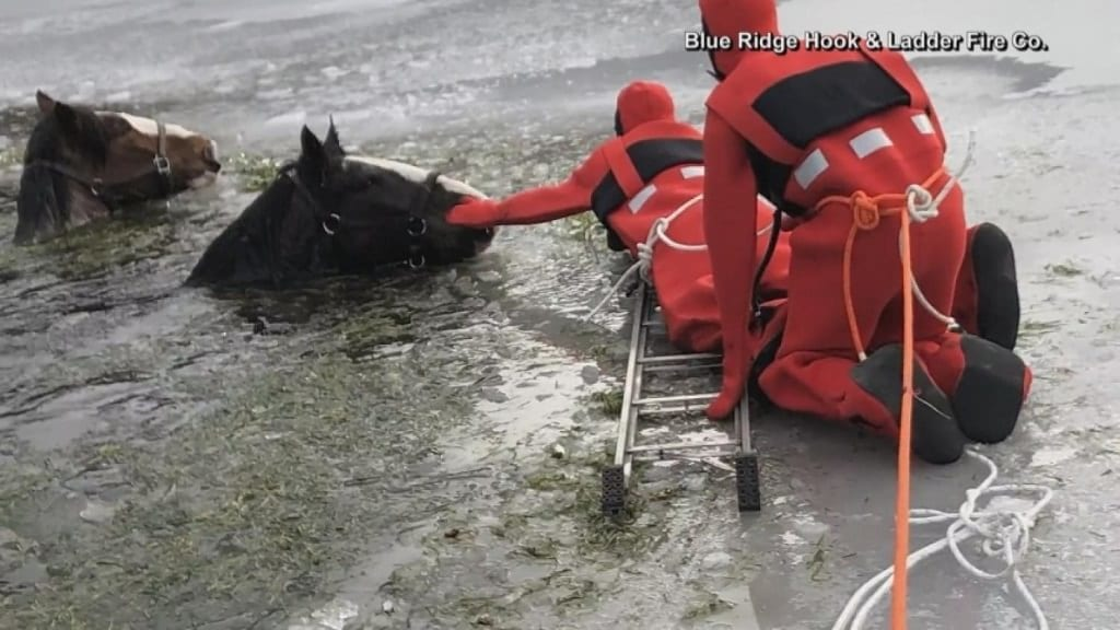 VIDEO: Horses rescued from icy pond | KVOA com