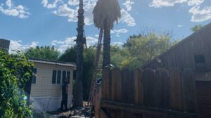 Tree trimmer rescued