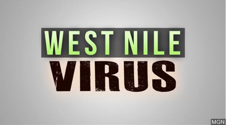 Minnesota grouse hunters asked to collect samples for West Nile virus study