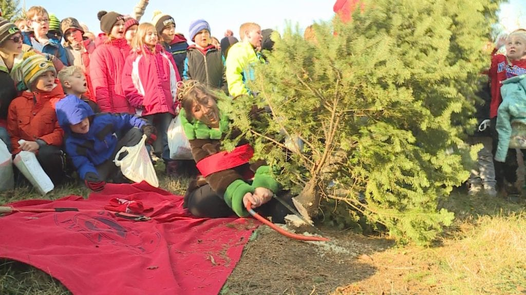 wisconsin is the nations fifth largest christmas tree producer with an annual harvest of more than 600 thousand trees valued at more than 16 million