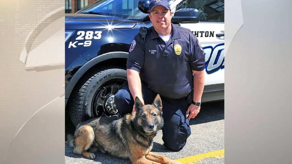 Rumor of Stoughton K-9's demise untrue, police say