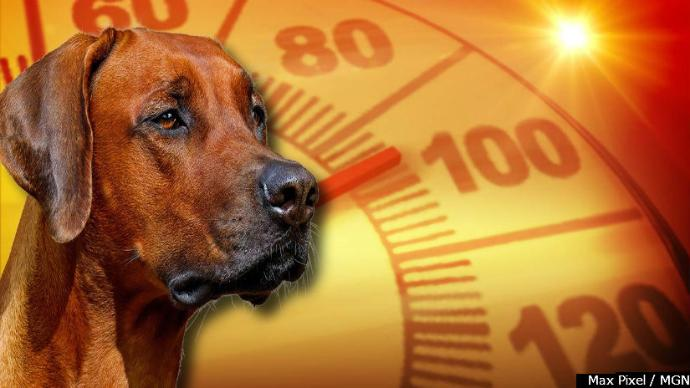 Green Bay Police take dozens of calls about dogs in hot vehicles