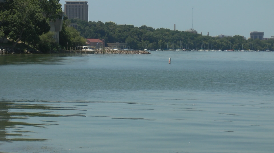Dane County lakes see fewer algae blooms because of weather, clean-up projects