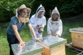 personnes qui travaillent dans les ruches