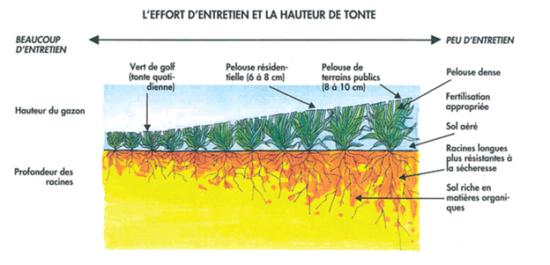entretien écologique de la pelouse