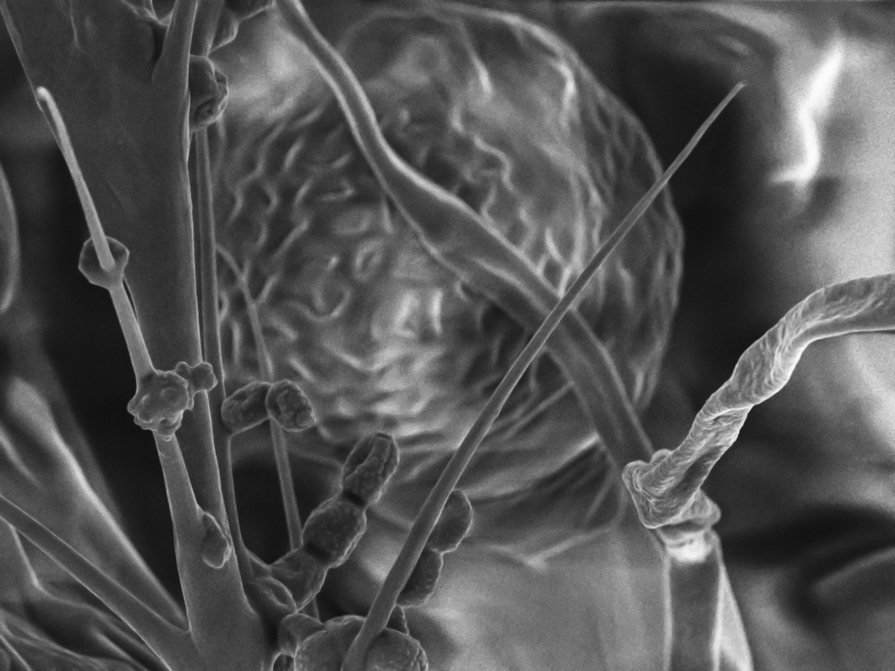 Radha Chaddah, The Sound of You, 2018. Scanning electron micrograph of a spec of beeswax magnified 3000x