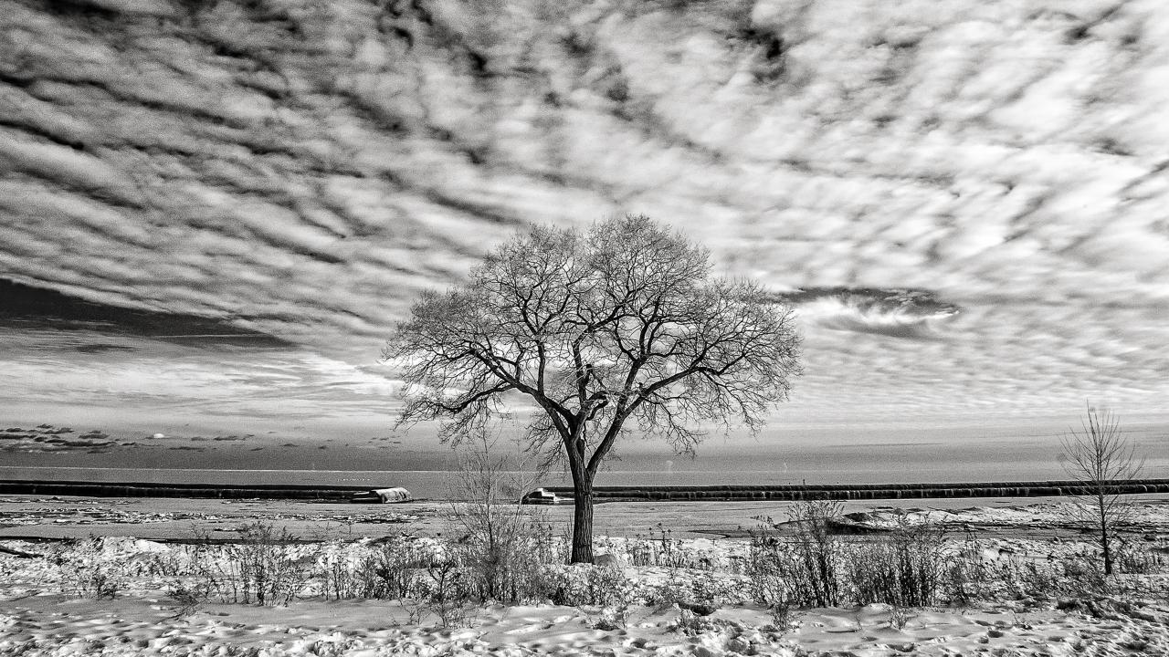 Mirna Chacin, Winter Blues, 2019