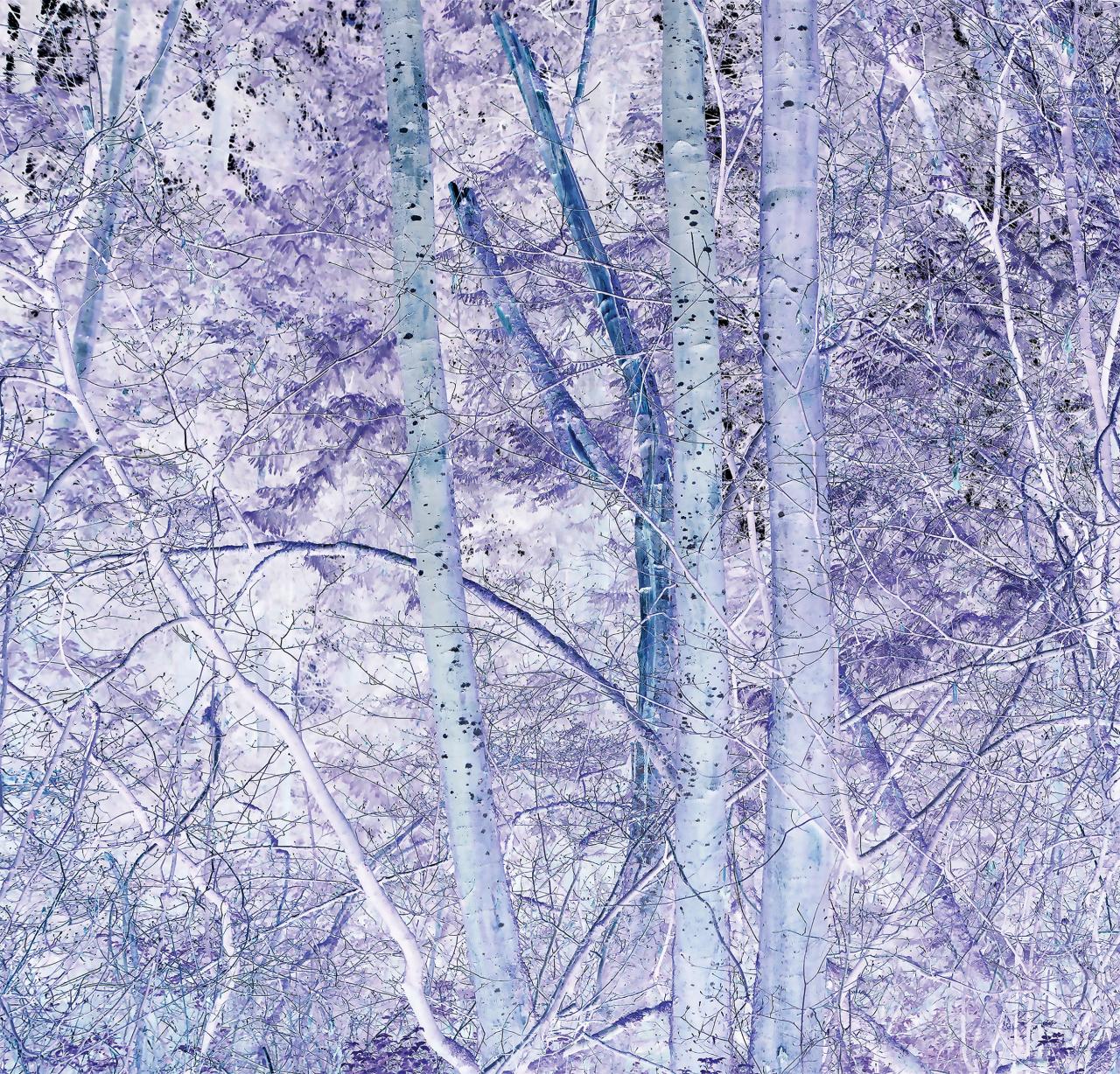 Hua Jin, Forest (inverse detail), 2017. Inkjet print, 30 x 30.