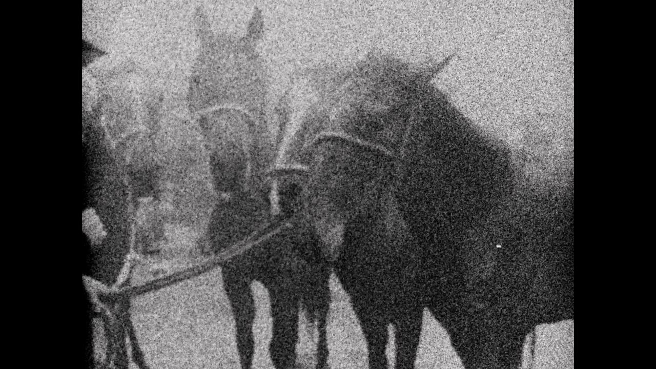 Mike Hoolboom, Three Dreams of Horses, 2018. Video still. Courtesy of the artist.
