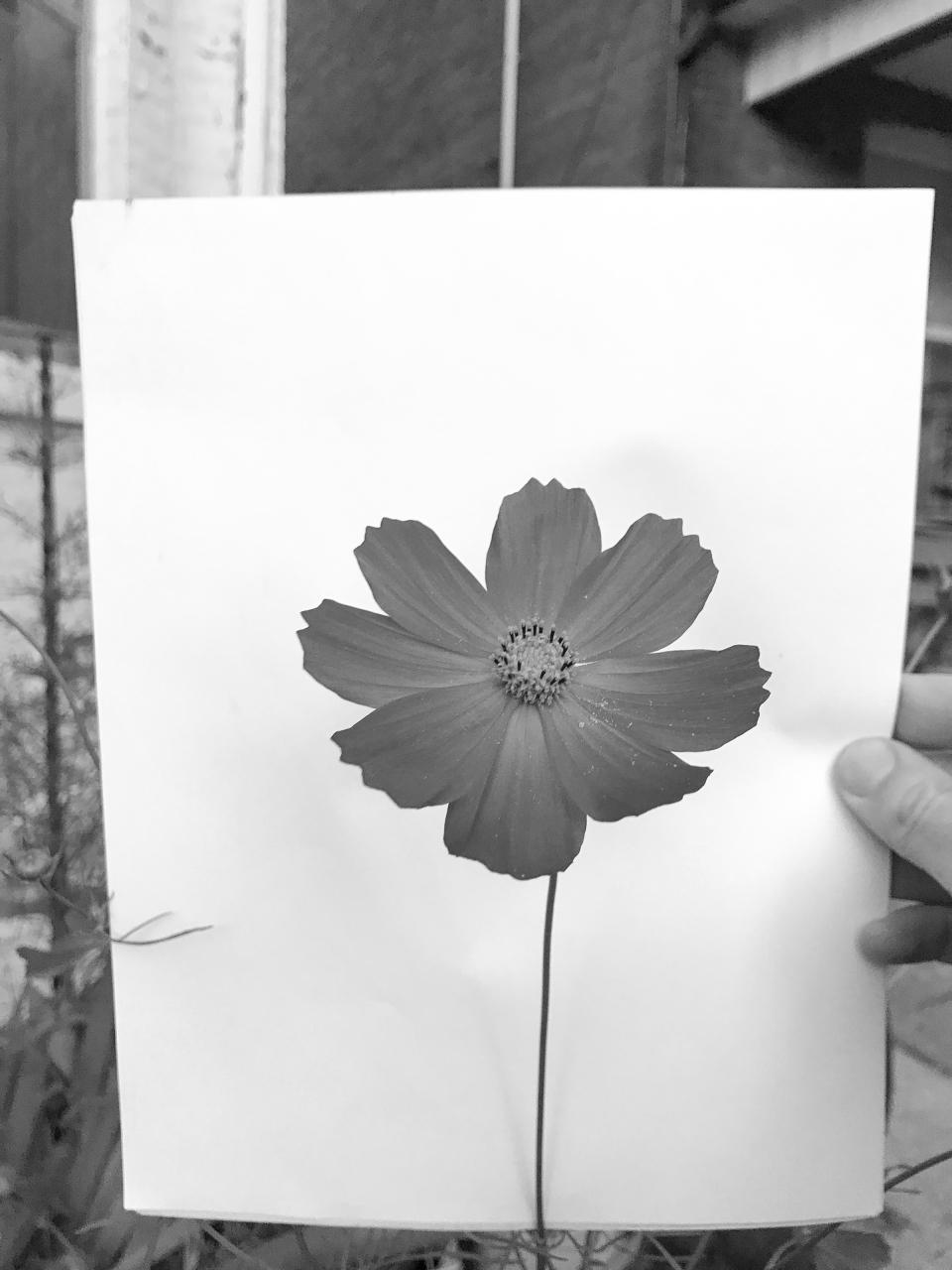 Jeff Harris, Flower Portrait 3, 2019