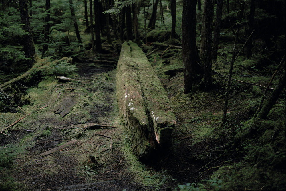 Johan Hallberg-Campbell, Haida Gwaii, British Columbia (War canoe sits unfinished in the forest where it fell. Dated 1860s), 2014. Courtesy of the artist.