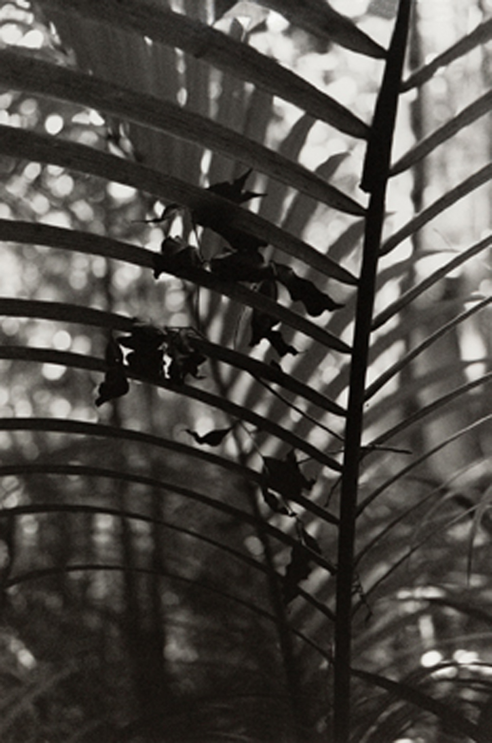 Daniel Steegmann Magrané, Spiral Forest, (detail), 2015. 5 chromogenic prints and 6 gelatin silver prints, 30.3 x 22.4
