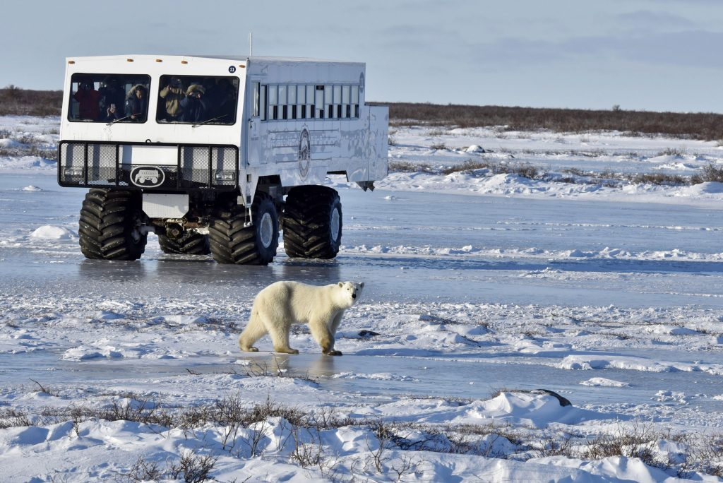 Tundra Bug with Polar Bear