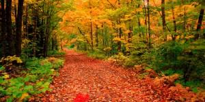 Fall Nature Walk @ Claremont Nature Centre