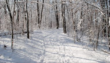 A snowy trail in the forest
