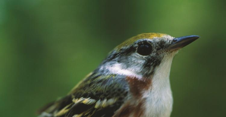 Bird watching at TRCA parks