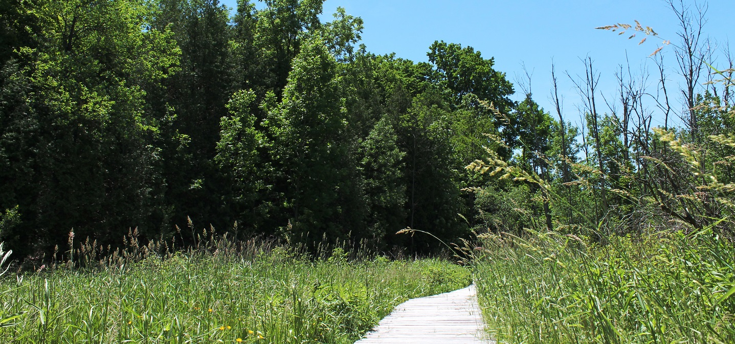 trail at bruces mill conservation park
