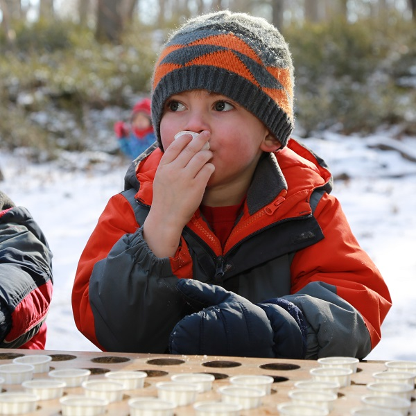 small boy samples maple syrup at bruces mill conservation park