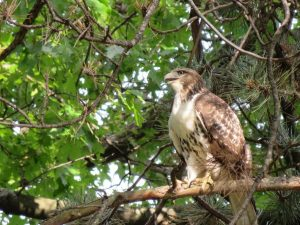 Workshop: Birds of Prey @ Kortright Centre for Conservation