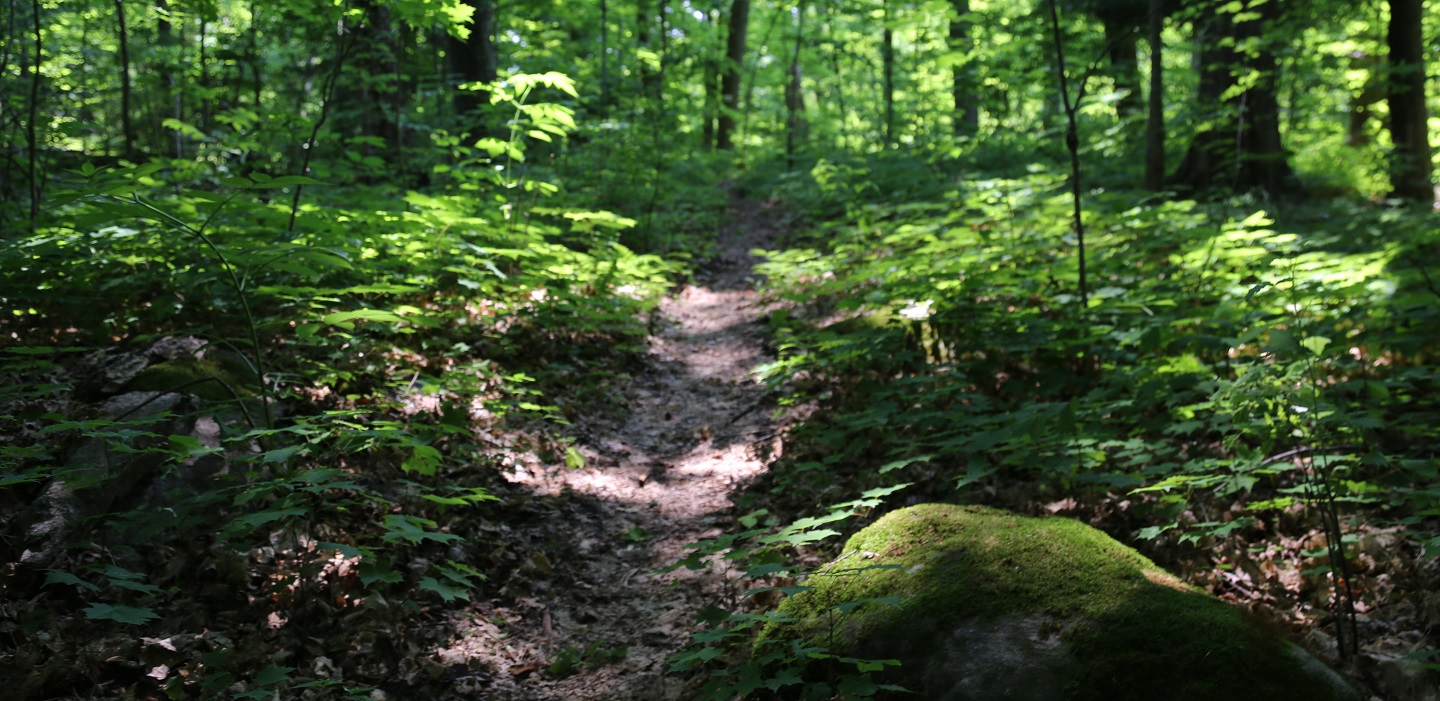 hiking trail at glen haffy conservation area